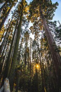 Het eerste lustrum voor Fundshare Sequoia Quantum Satis.