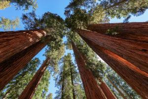 De beleggingsfondsen van Sequoia